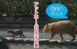 営業事務 兼 受付・案内業務 栃木県栃木市【10653】 イメージ